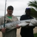 New Resort Record achieved. Today the largest fish ever caught inshore by a Resort guest was acheived…
